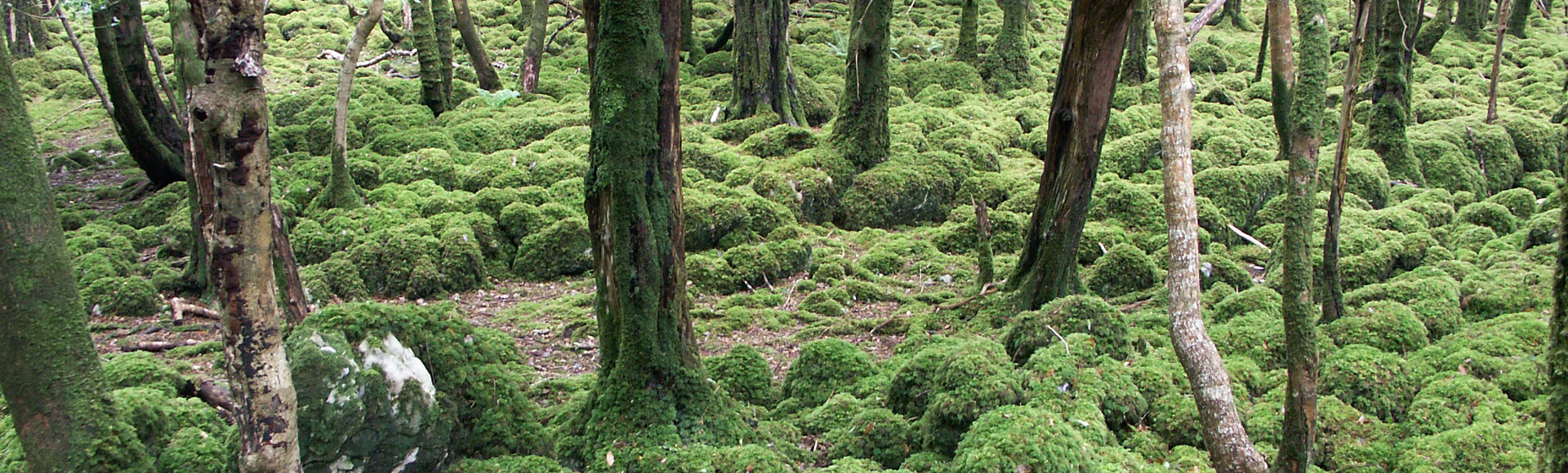 Wald 0725 415